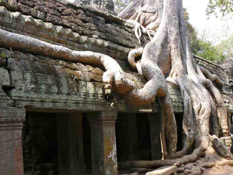 Cambodia_Angkor_Ta_Prohm_Roots