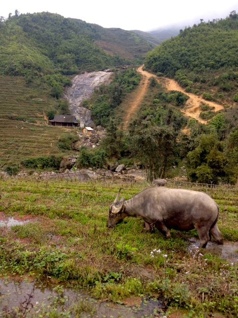 Vietnam_Sapa_buffalo_hike