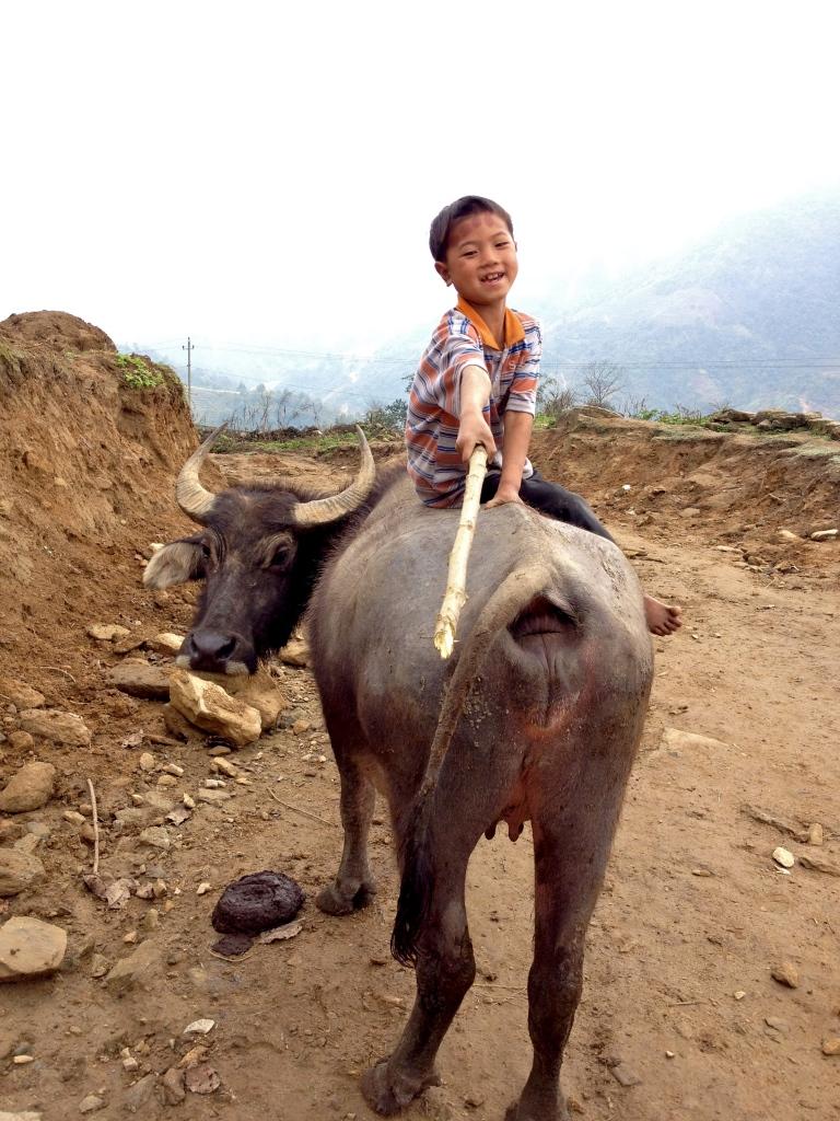 Vietnam_Sapa_child_riding_buffalo