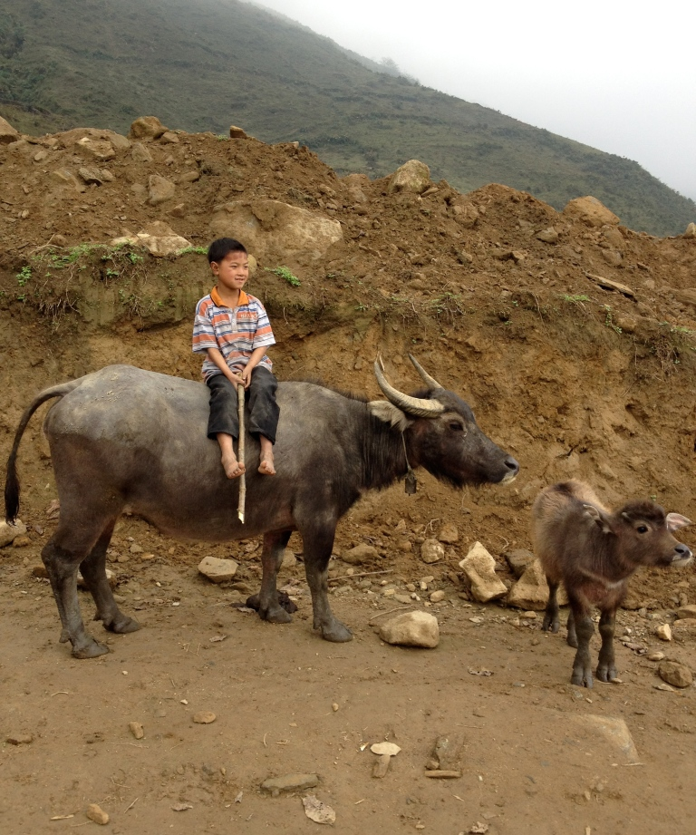 Vietnam_Sapa_child_buffalo_mini_buffalo