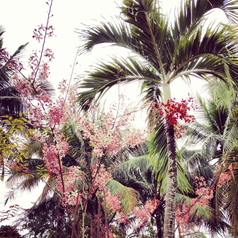 Plant obsession in Luang Prabang