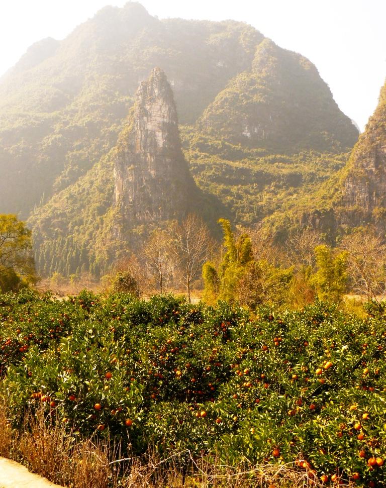 Yangshuo_Li_River_Hike_Orange_Fields