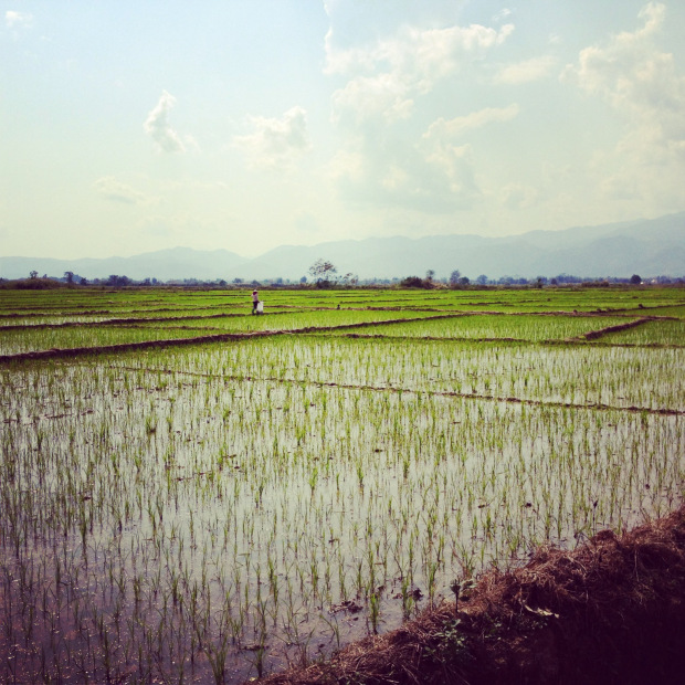 Laos_Luang_Namtha_Beer_rice_field2