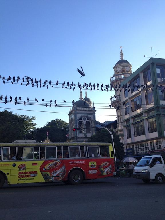 Myanmar_Yangon_pigeons